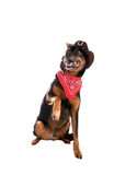 A dog in a cowboy hat and a scarf lifted one paw. Isolated on wh Stock Photo