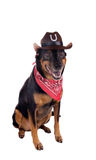 A dog in a cowboy hat and scarf sitting and looking forward. Iso Royalty Free Stock Image