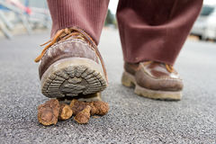 Dog crap. Shoe walking on dog crap Stock Photography