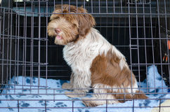 Dog crate in car. A dog sitting in a dog crate/cage in a car Royalty Free Stock Images