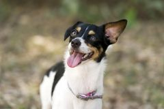 Dog Crazy Happy and Funny Royalty Free Stock Photo