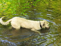 Dog in creek Stock Photo