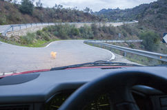Dog crossing by narrow mountain curvy road. Motion blurred Stock Photo