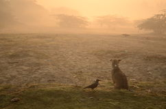 A dog and a crow. Are sitting on the ground waiting the the sun to rise Stock Photos