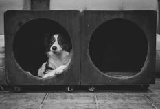 Dog in a cubby Stock Photos