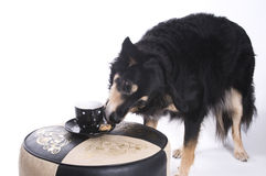 Dog with a cup of coffee Stock Images