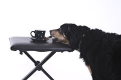 Dog with a cup of coffee Royalty Free Stock Images