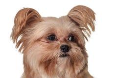 Dog with Curious Looking Stock Photos