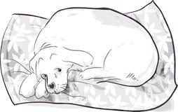 Dog on cushion Royalty Free Stock Photography