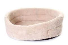 Dog cushion in studio Royalty Free Stock Photo