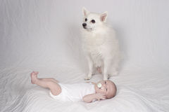 Dog with cute baby girl. Dog sat by cute four week old baby girl with pacifier in mouth royalty free stock photography