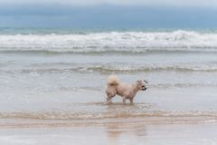 Dog running happy fun on beach when travel at sea Royalty Free Stock Photos