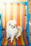 Dog sitting on beach chair when travel at sea stock photos