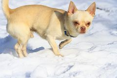Dog with a cute face is in the snow Royalty Free Stock Photos