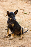 Dog. Cute and funny looking dog Royalty Free Stock Photos