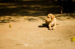Dog. Cute little dog and pathetic Stock Image