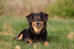 Dog. A dog with cute look Stock Photo