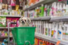 Dog so cute wait a pet owner at pet shop. Dog so cute mixed breed with Shih-Tzu, Pomeranian and Poodle wait a pet owner for shop a pet food (Dog, Cat and other) stock photo