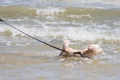 Dog so cute running on beach with happy fun when travel at sea w Stock Photo