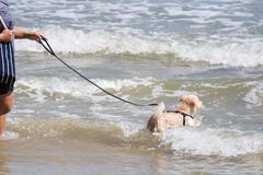 Dog so cute running on beach with happy fun when travel at sea w Stock Images