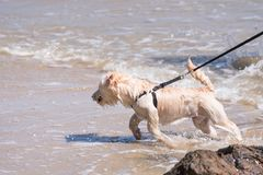 Dog so cute running on beach with happy fun when travel at sea w Royalty Free Stock Photos