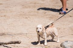 Dog so cute running on beach with happy fun when travel at sea w Stock Image