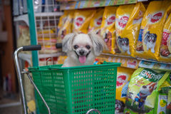 Dog so cute wait a pet owner at pet shop Royalty Free Stock Images