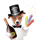 Dog with cylinder hat, champagne bottle and firework rockets,. Vector illustration, isolated on white background Royalty Free Stock Photos