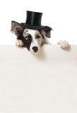 Dog with cylinder hat. Looking over a wall Stock Images