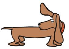 Dog-dachshund Stock Image