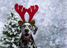 Dog Dalmatian dress for the new year as a Christmas reindeer hor Royalty Free Stock Image