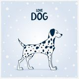 Dog Dalmatian Royalty Free Stock Photo
