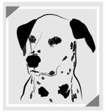 Dog dalmatian Royalty Free Stock Image