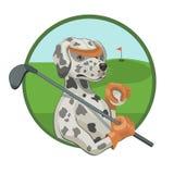 Dog Dalmatians playing Golf Stock Photography