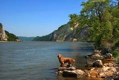 Dog on Danube riverbank Stock Image