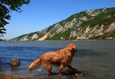 Dog on Danube riverbank Stock Photo