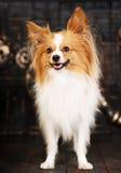 Dog on a dark background Stock Photography