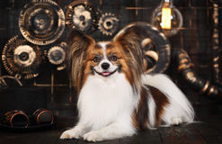 Dog on a dark background in the style of steampunk Royalty Free Stock Photography