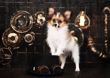 Dog on a dark background in the style of steampunk Stock Images