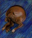 Dog on a dark blue carpet Stock Image