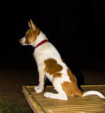 Dog in the dark Stock Photography