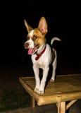 Dog in the dark Stock Photo