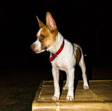 Dog in the dark Royalty Free Stock Photography