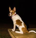 Dog in the dark Royalty Free Stock Photos