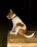 Dog in the dark Royalty Free Stock Photo