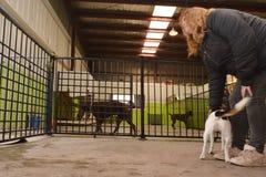 Dog daycare Royalty Free Stock Image