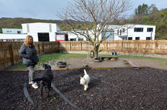 Dog daycare. WELLINGTON - AUG 22 2014:Dog daycare.The popularity of such establishments in the world has grown greatly since the early 1990s, and arose out of royalty free stock photos