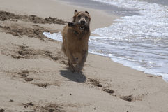 Dog Days at the Beach stock images