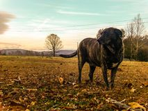 Dog Days Royalty Free Stock Photography
