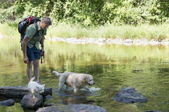 Dog Days of Summer. A dog walker leads a Yellow Lab and West Highland Terrier to water while hiking on a hot summer's day Stock Photography